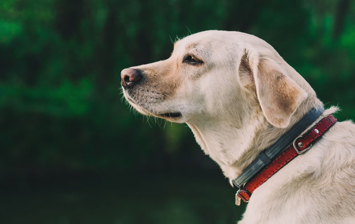how to make your dog sit and stay