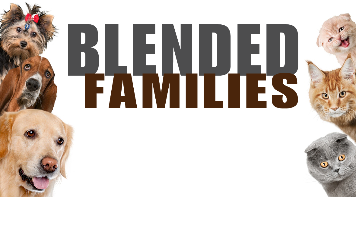 Blended Families image